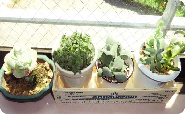 植物を育てています
